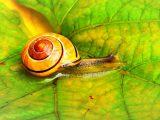 Snail Farm recenzie
