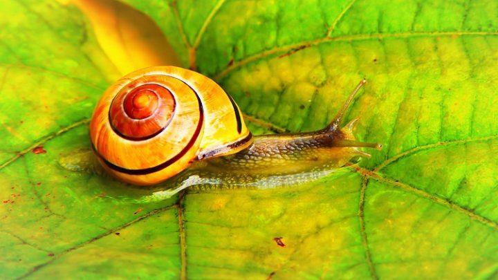 Snail Farm – zloženie, cena, komentáre